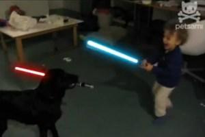Dog Vs. Child Lightsaber Battle   Giant Freakin RobotGiant ...