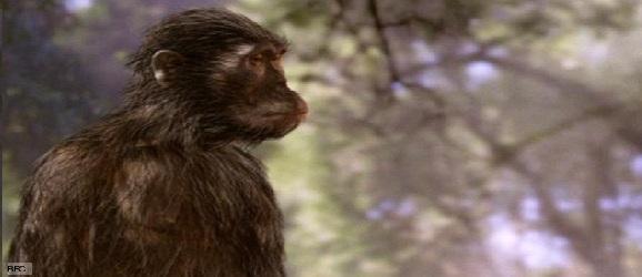 australopithecus_1