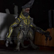 Pacific Rim Knifehead