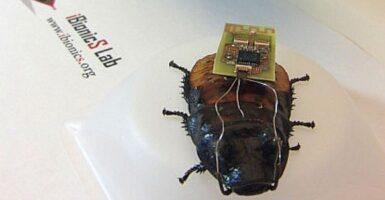 kinect cockroach