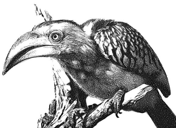 e-david bird