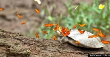 butterflies and turtles