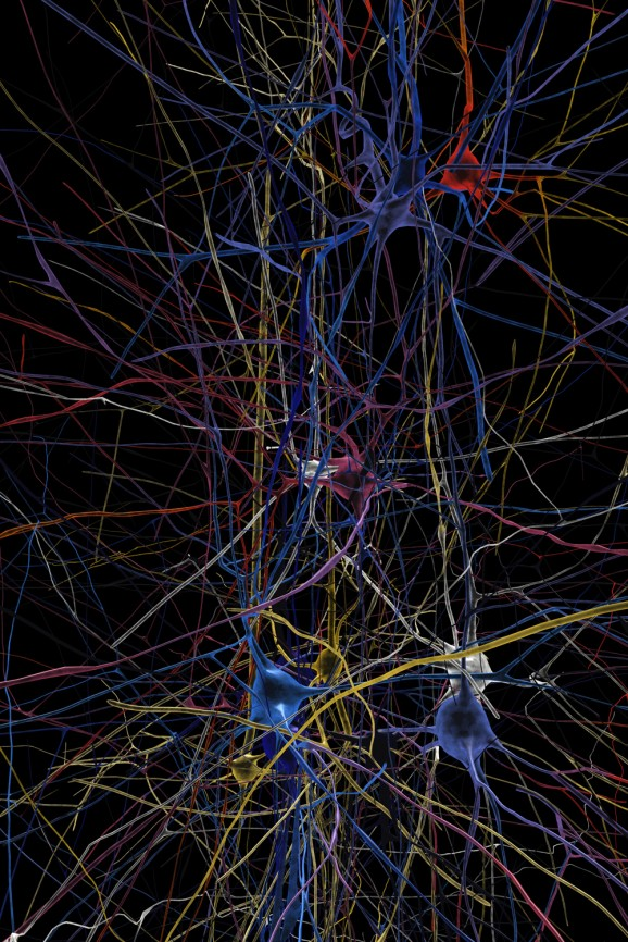 a simulated neuronal network