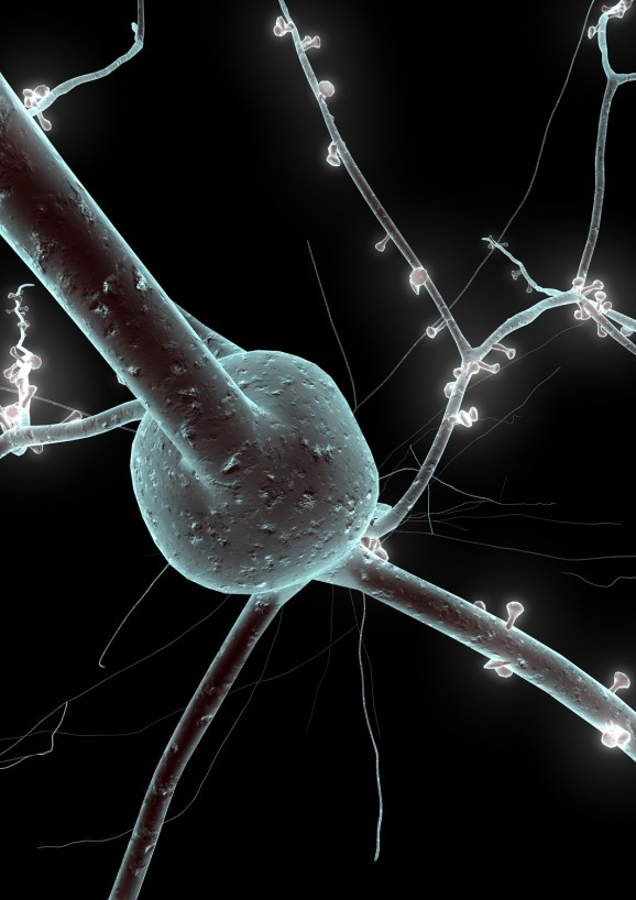 single neuron