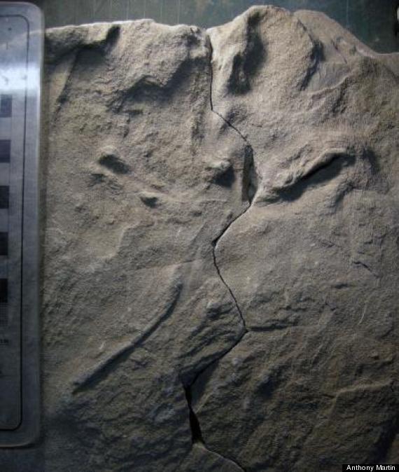 fossilized bird prints