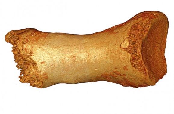 Neanderthal toe