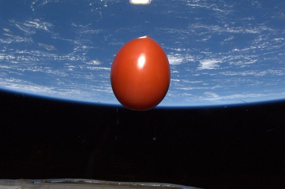 tomato in iss