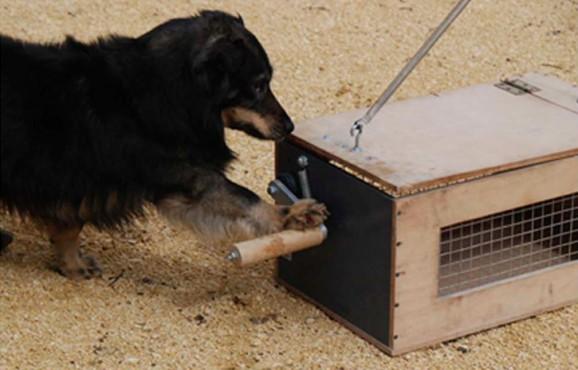 dog opening box