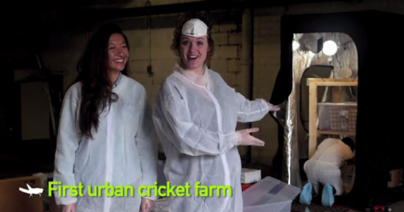 urban chicken farm