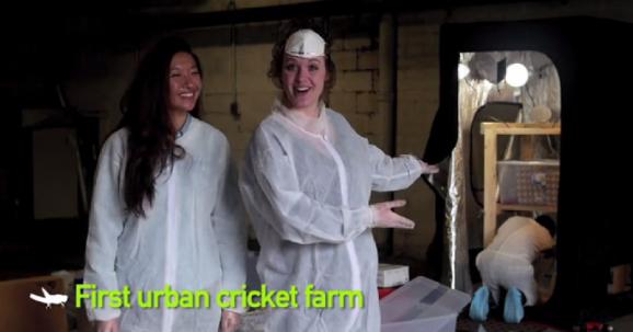 urban chicken farm