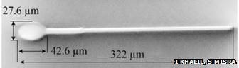 magnetosperm