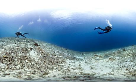 dead reef
