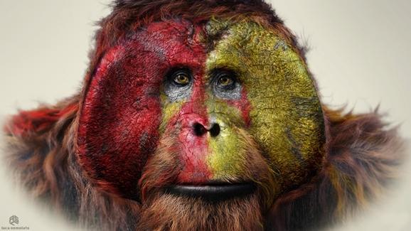 Apes12