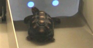tortoise touchscreen