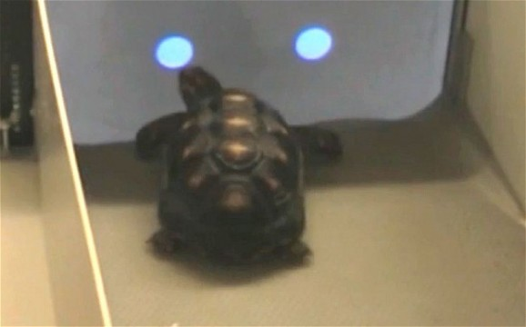 tortoise touchscreen