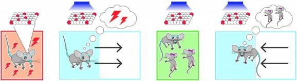 mouse swap
