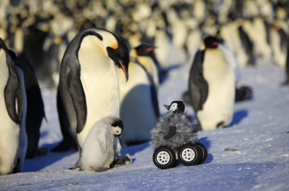 penguinbot
