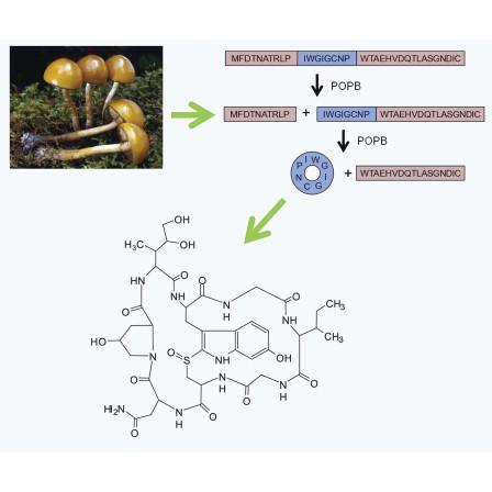 cyclic peptide