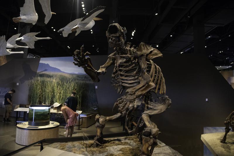 Prehistoric sloth skeleton