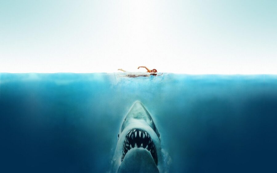 Shark horror