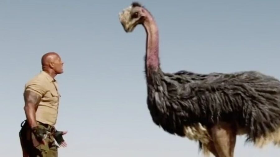 The Rock fights an Ostrich