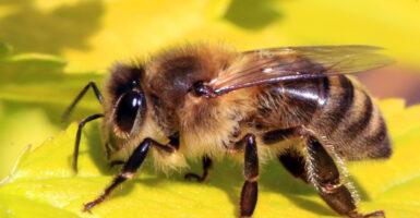 bee honeybee bees