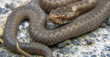 snakes snake