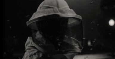 wandavision beekeeper