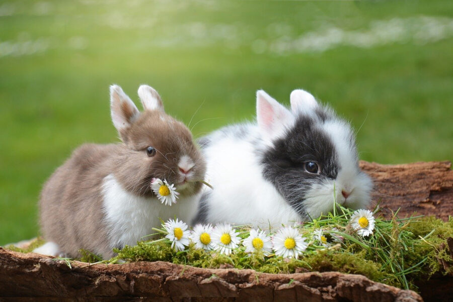 rabbits cute