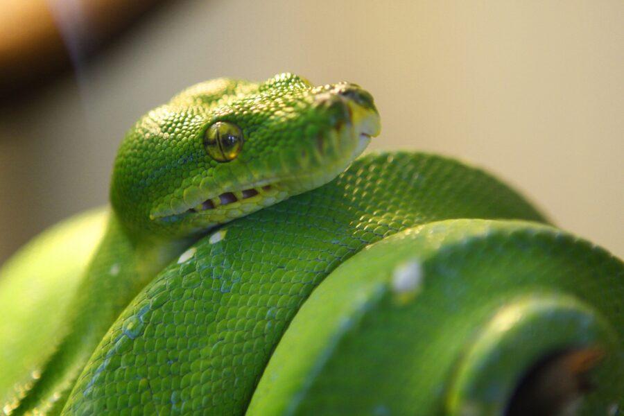 bright green reptile