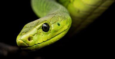 giant snake