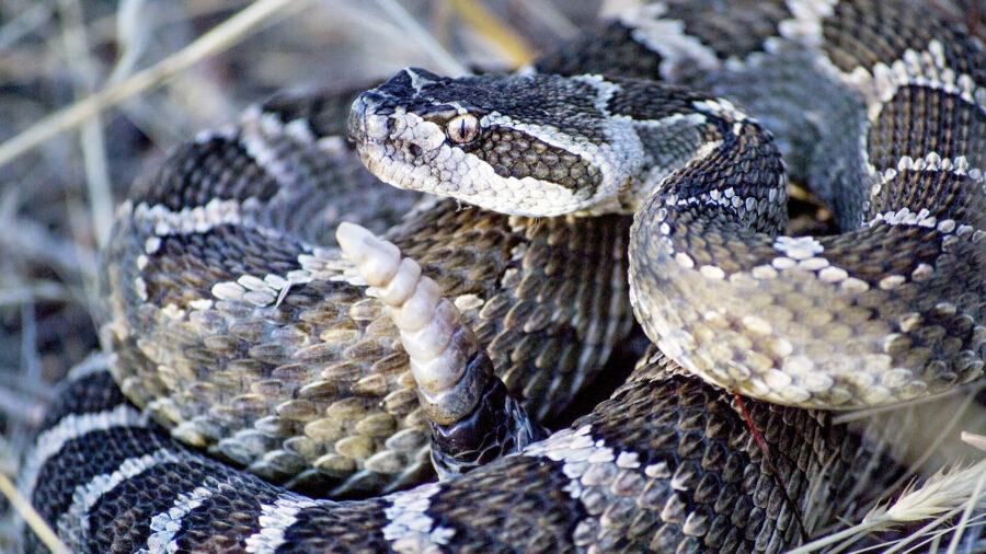 snake bite snakes