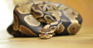snake snakes