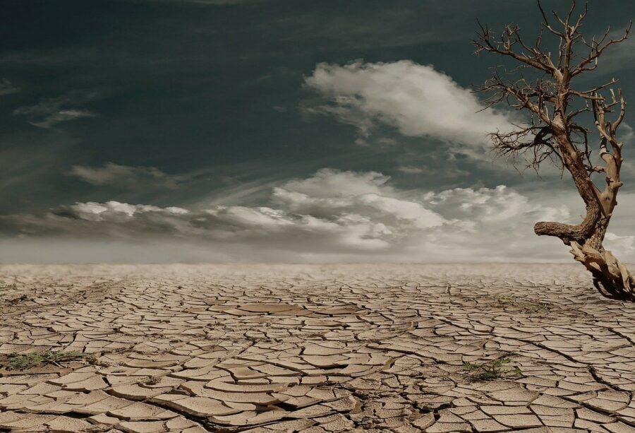 mass extinction event